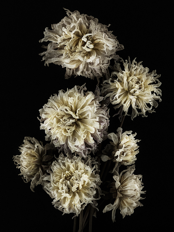 dried flower_pw