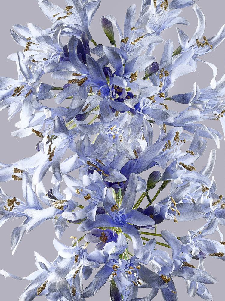 silk flower_pw