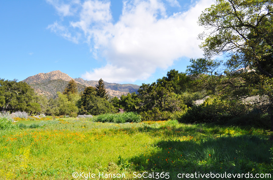 2 santa barbara botanic garden - Santa Barbara Botanic Garden