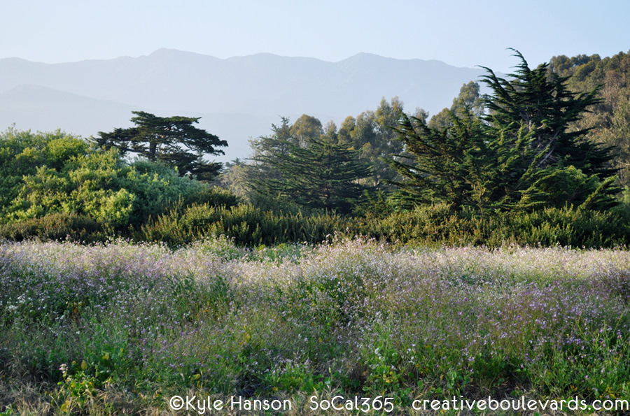 KyleHanson_CreativeBoulevards_carpinteria bluffs nature preserve.jpg