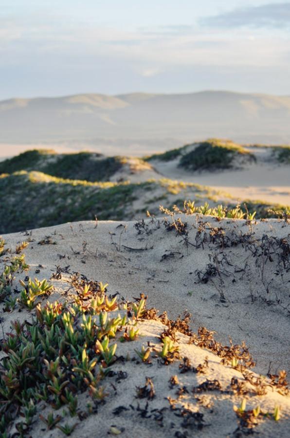 guadalupe nipomo dunes