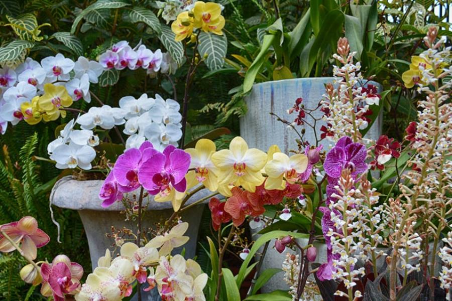 botanical building orchids