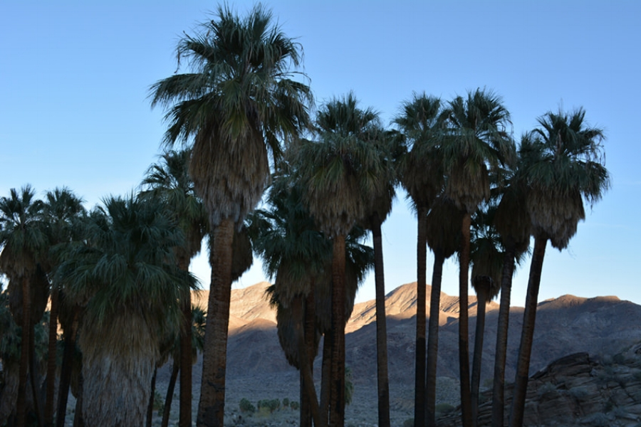 andreas canyon palm springs