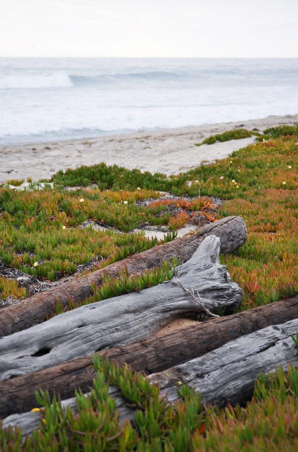 KyleHanson_CreativeBoulevards_DSC_0572 county line beach.jpg