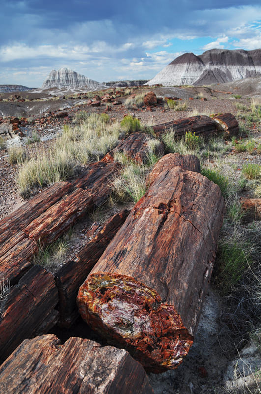 Long Logs Petrified Forest