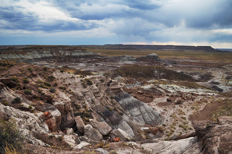 Jasper Forest Petrified Forest