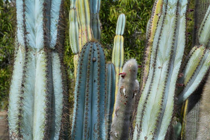 1935 Old Cactus Garden Balboa Park