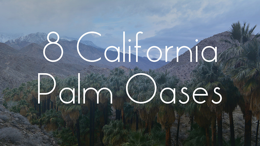 8 California Palm Oases