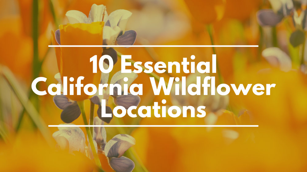 10 Essential California Wildflower Locations