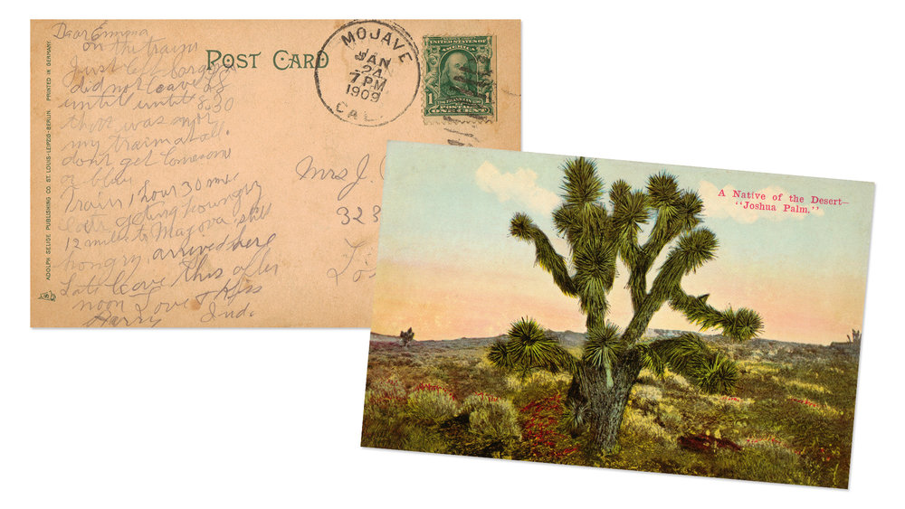 Joshua Tree Antique Postcard