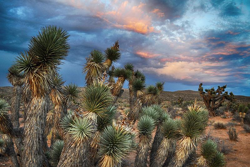KyleHanson_CreativeBoulevards_Nevada_DSC_0364 3.jpg