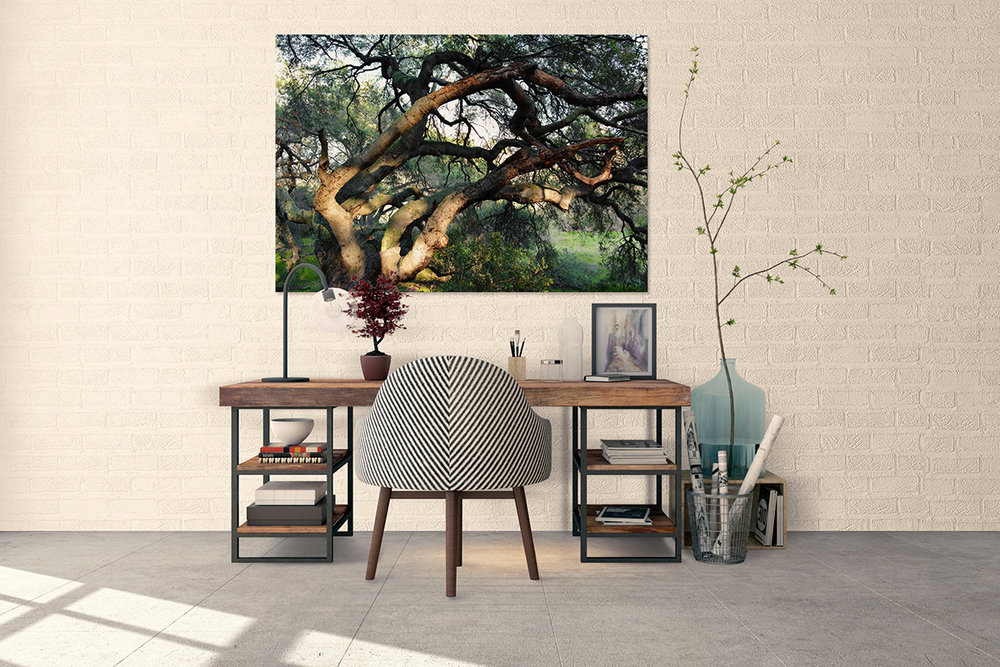 Twisted Oak Tree California Fine Art Print