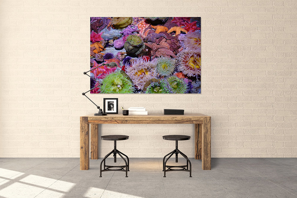 Pacific Ocean Reef Aquarium Fine Art Print