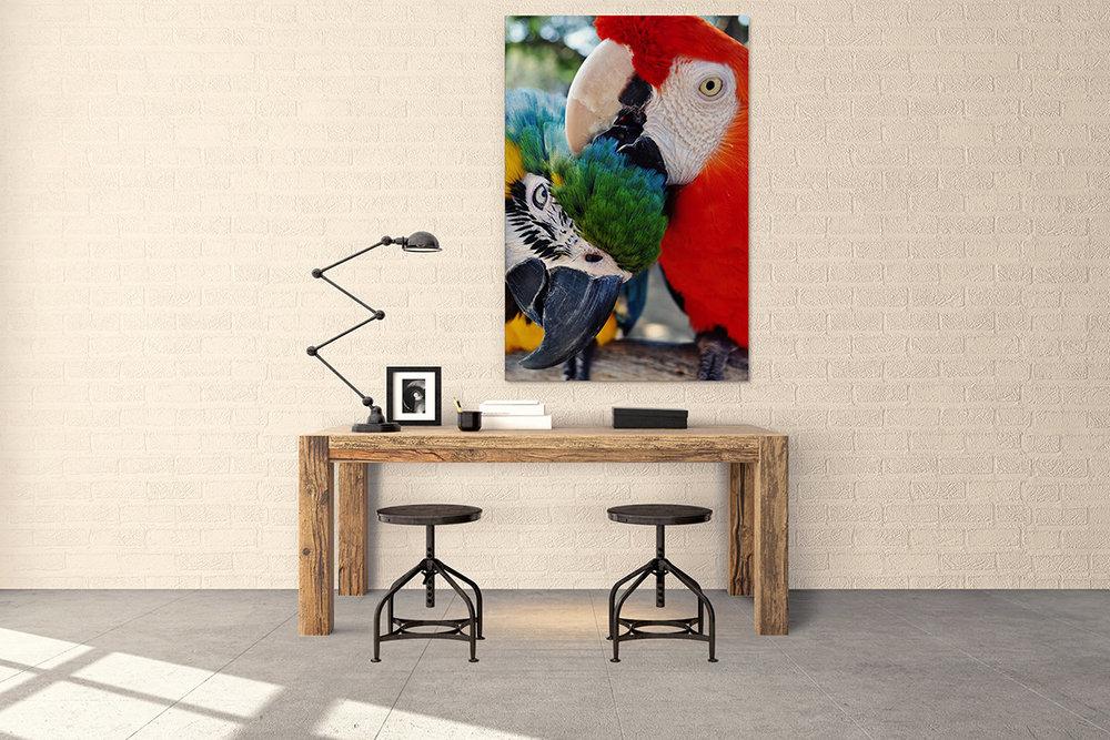 Macaw Parrots Fine Art Print