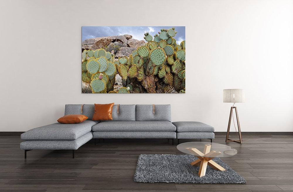 Desert Beavertail Cactus Fine Art Print