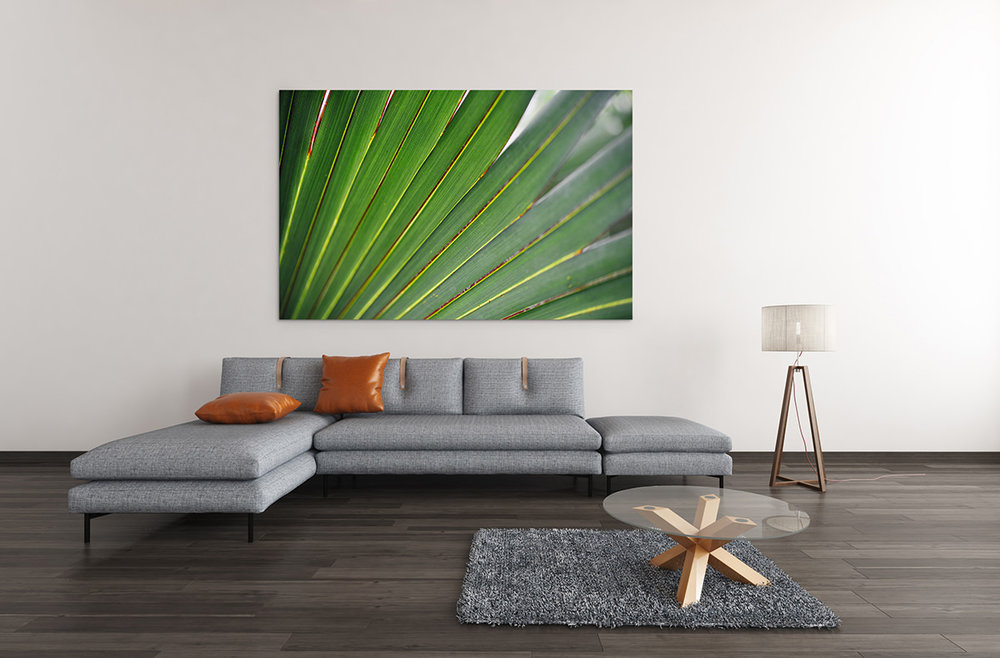 Palm Leaf Fine Art Print