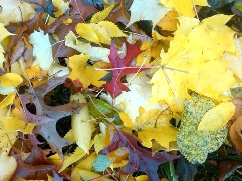 Fall company image.jpg