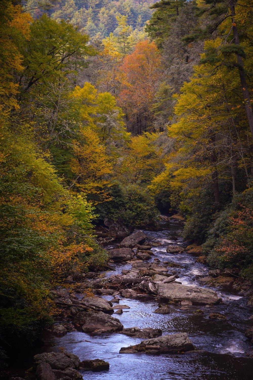 nature-2571252_1920.jpg