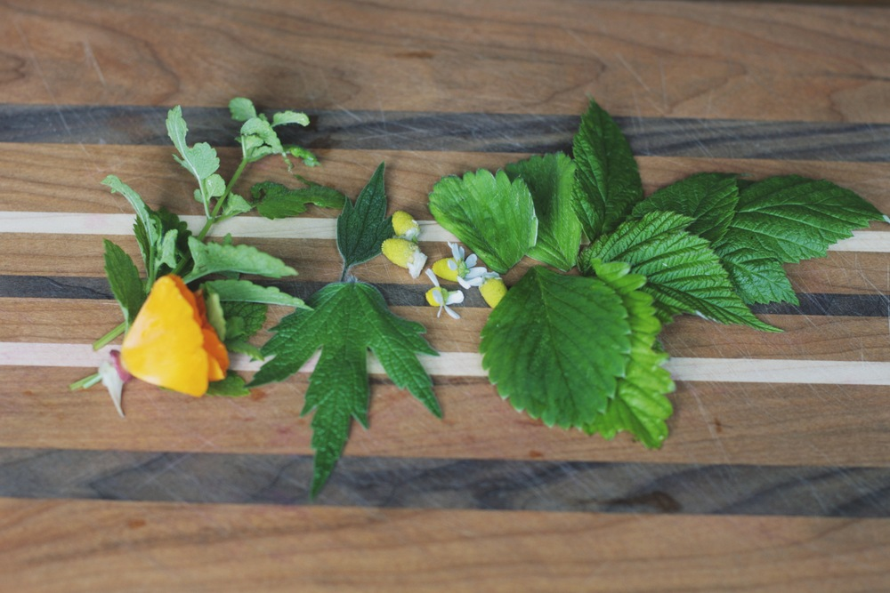 herbs for a spring tisane to relieve nausea