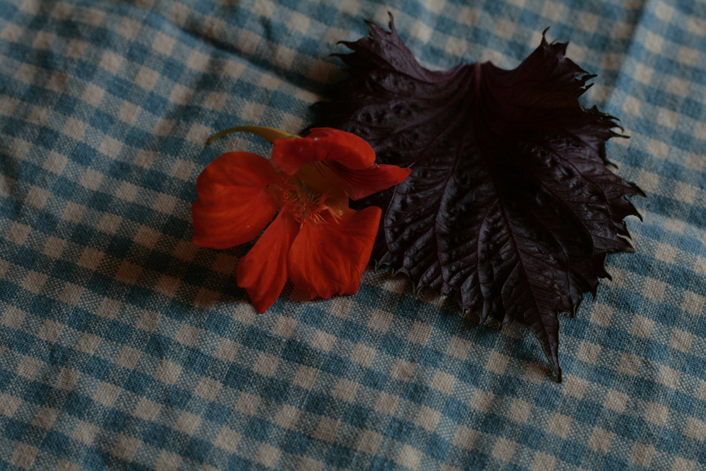 Nasturtium flower and shiso for syrup