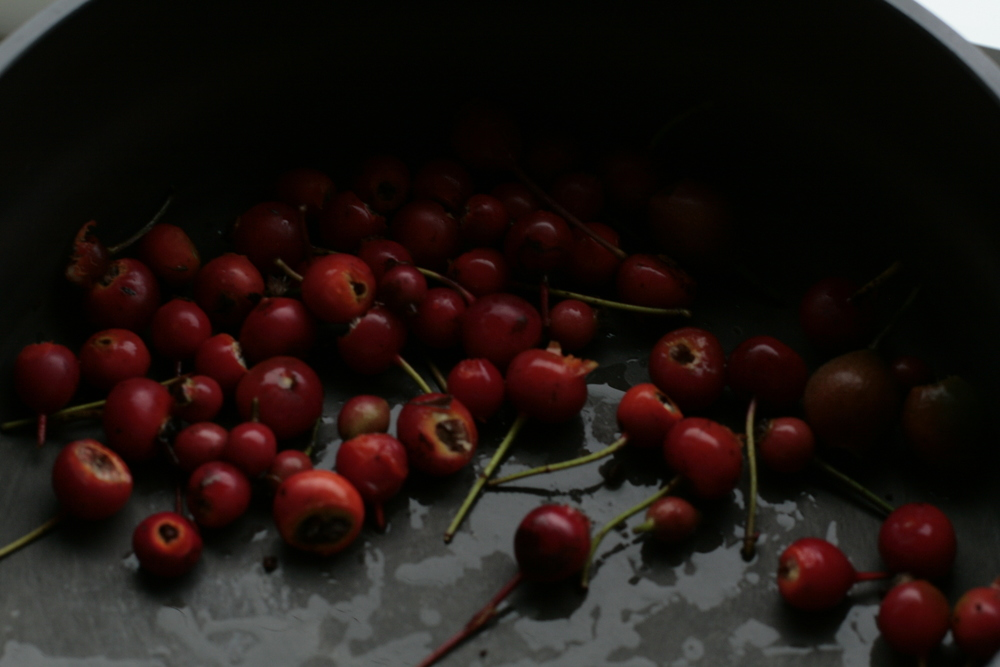 Rose Hips for Syrup