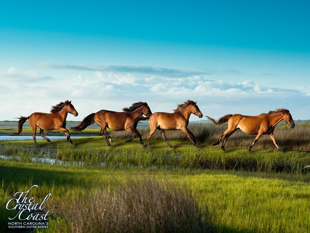 Crystal Coast Horses.jpg