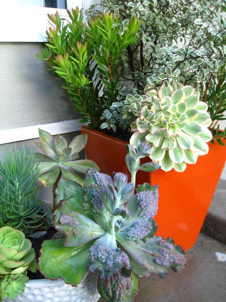 gardening-digs-02b300-768x1024