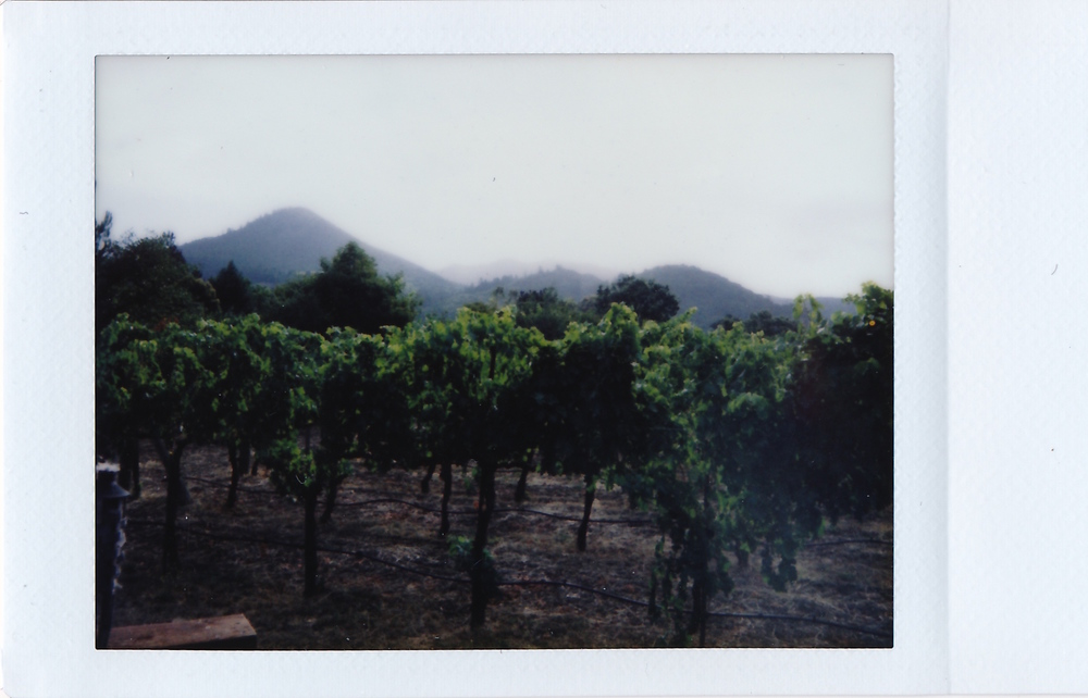 Fuji Instax: Saturday morning view from our small guest house