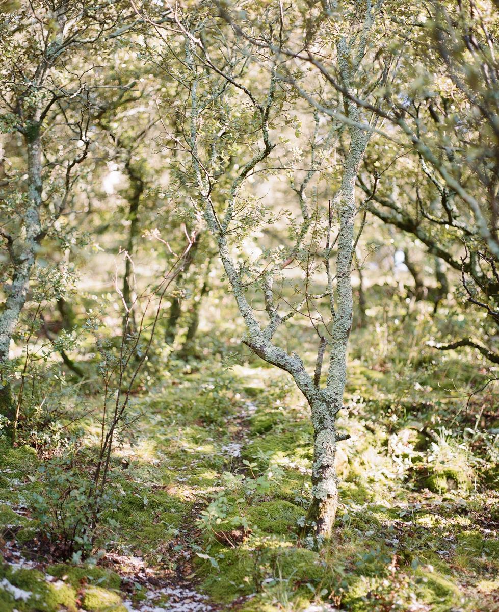 domaines-de-patras-alice-in-wonderland-alain-m-14.jpg