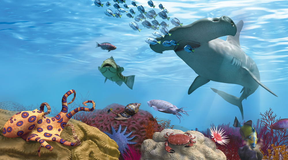 Coral Reef Predators