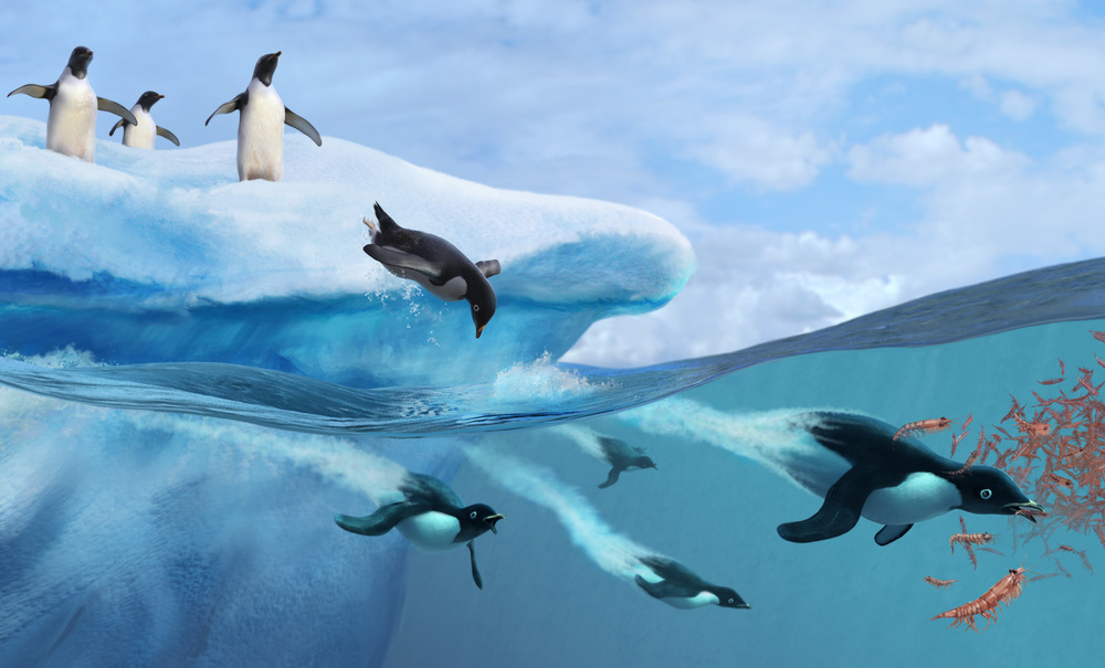 Penguins Feeding on Krill