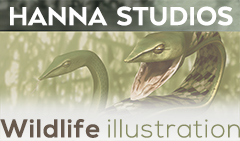 Hanna Studios Wildlife Illustration