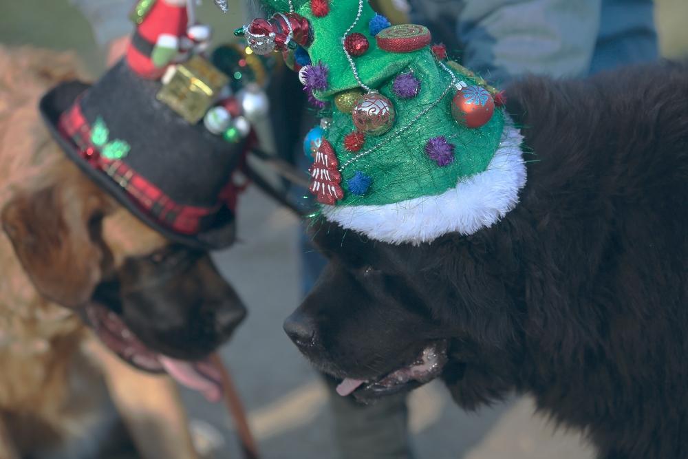 Boodah's Christmas Hat