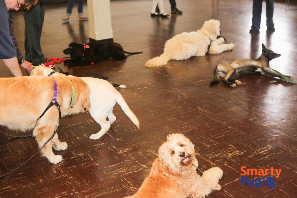 pup2-2014FEB-good-dogs-stays-8797.jpg