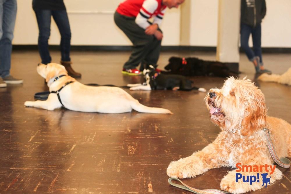 pup2-2014FEB-good-dogs-stays-8806.jpg