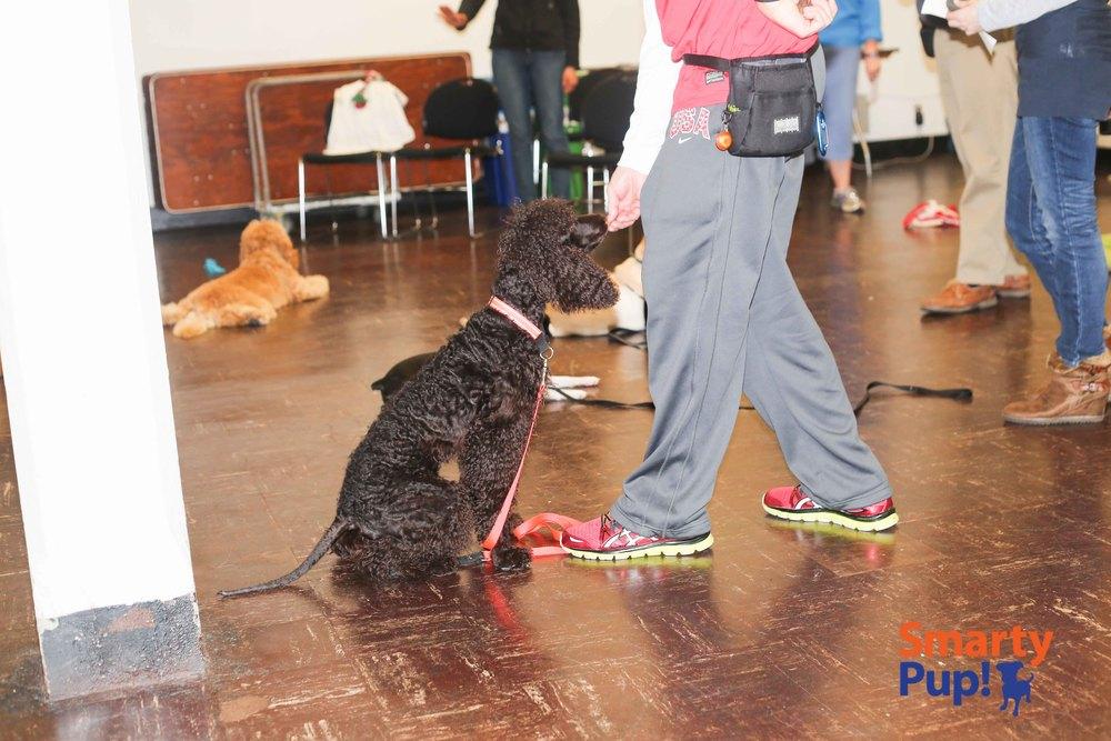 pup2-2014FEB-good-dogs-stays-8822.jpg