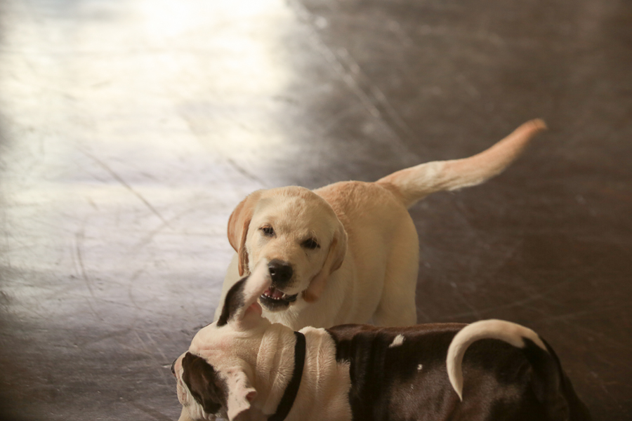 puppy-love-2014-at-SmartyPup-9750.jpg