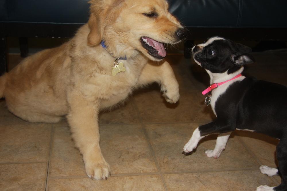 puppy-big-small.JPG