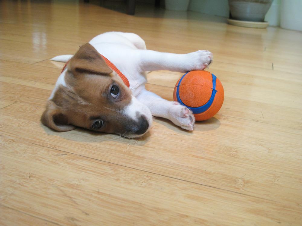 Smarty-baby-orange-ball-2.jpg