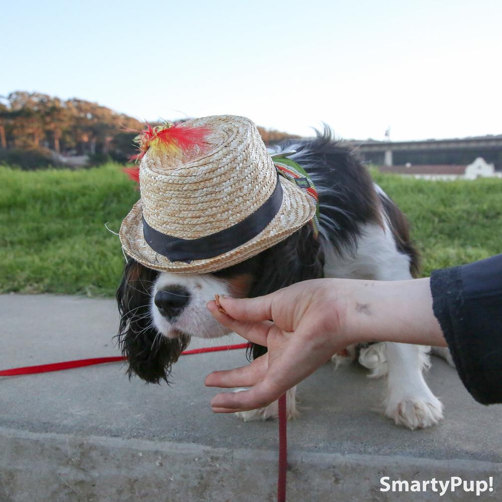 _lobo in hat cookie.jpg