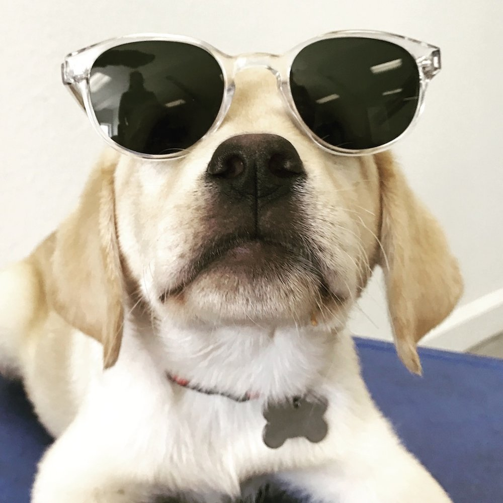 pavlov in glasses.JPG