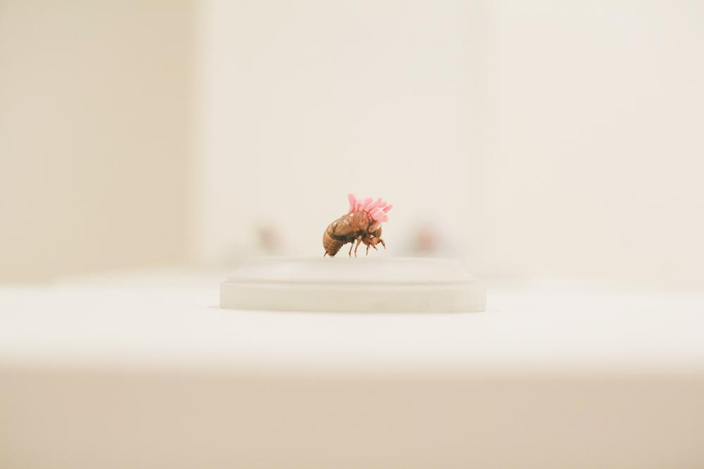 Cordyceps  |  cicada shell + air-dry clay  |  2013