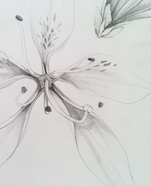 lily01_copy.jpg