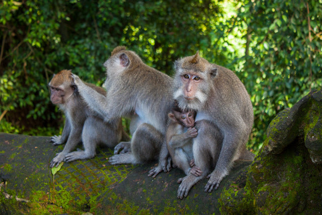A family of monkeys posed perfectly for my photo.