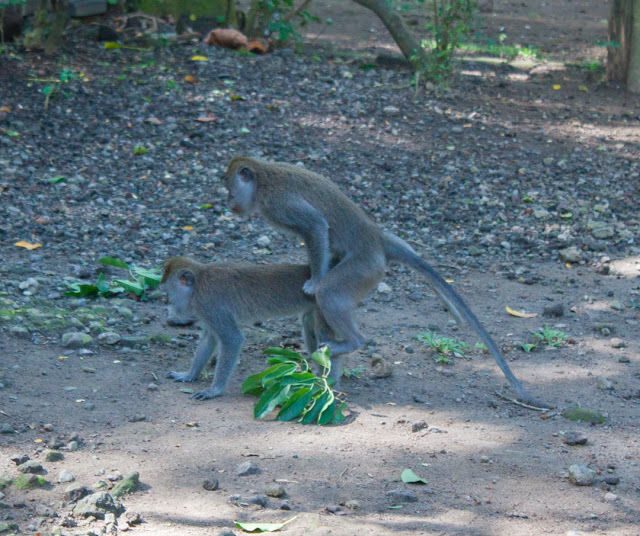 With as many monkey babies as I saw, I am sure this type of behavior happens all the time!
