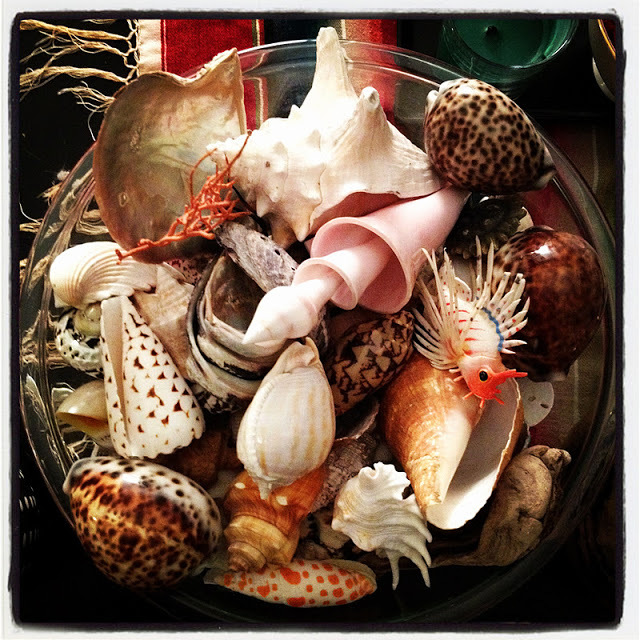 My mom likes to collect shells. I think they are all beautiful and rare little sea treasures... perfect for daily inspiration while hanging out in my house.