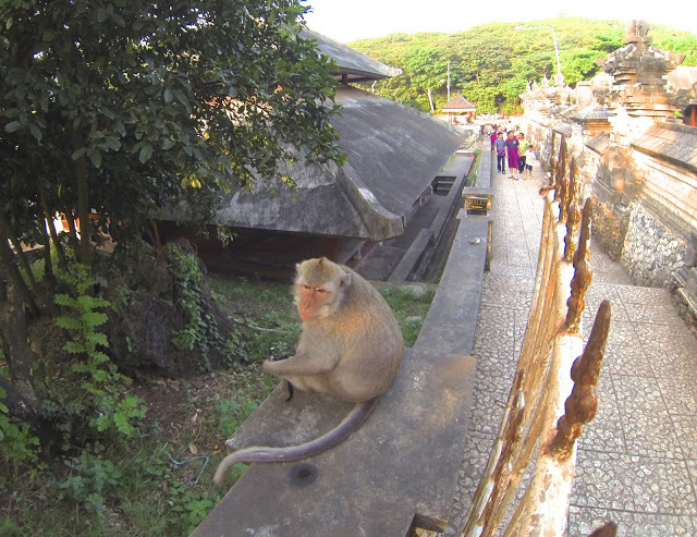 The monkey that tried to steal my wallet at The Uluwatu Temple