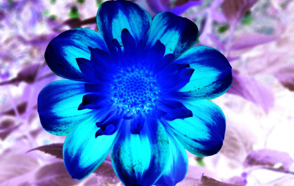 bluepurp.jpg