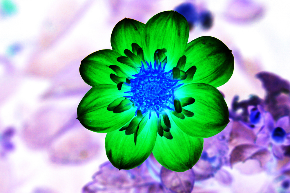 greenpurp.jpg