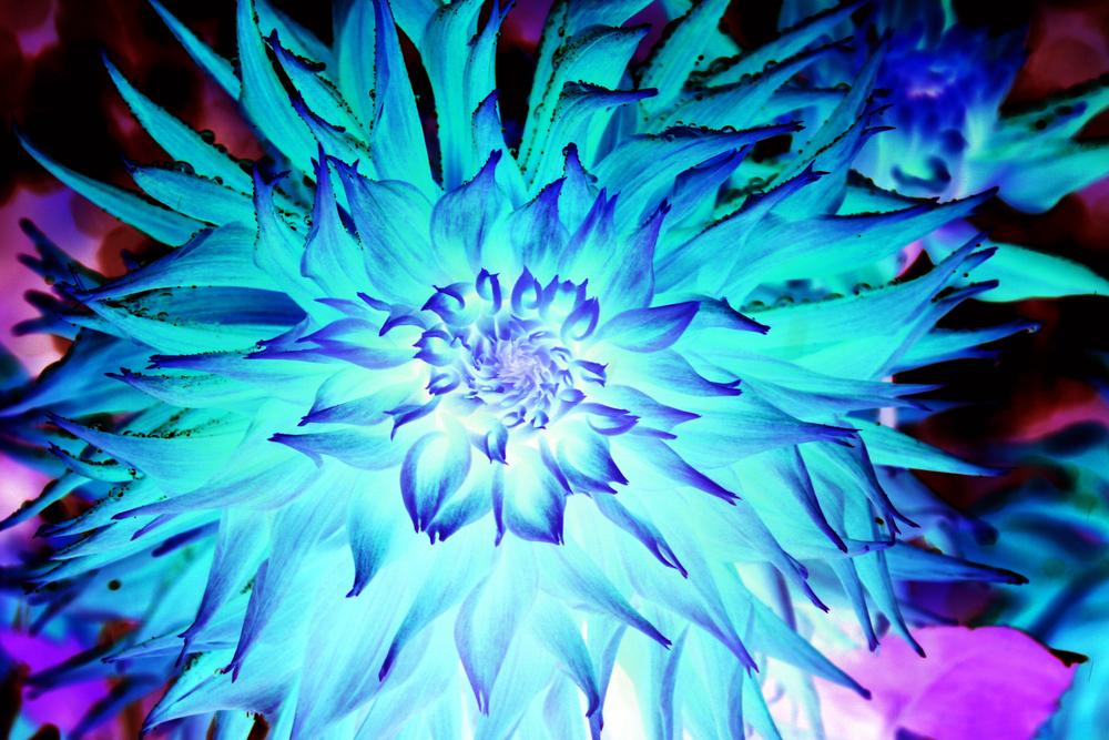 invertflower.jpg